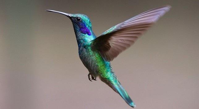 Waiting on Hummingbirds